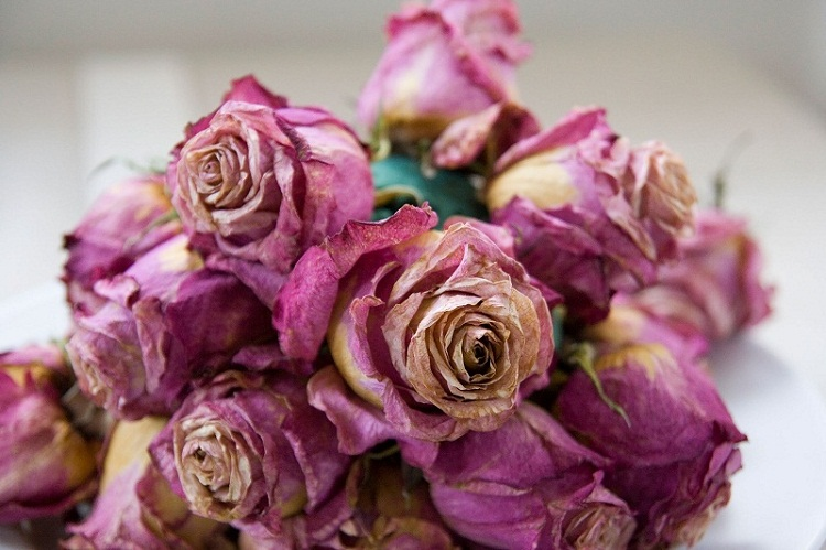 How to Preserve Fresh Flowers