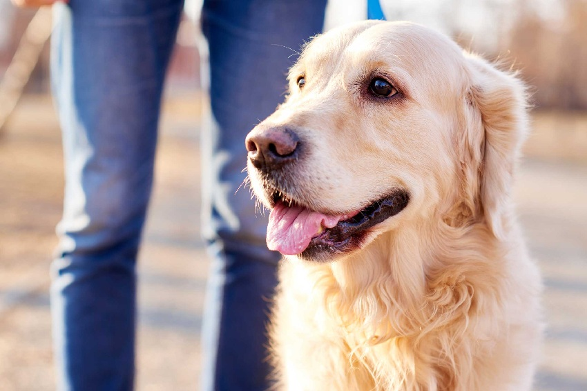 How To Take Care Of Your Canine Friend