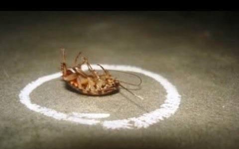 kill cockroach with boric acid