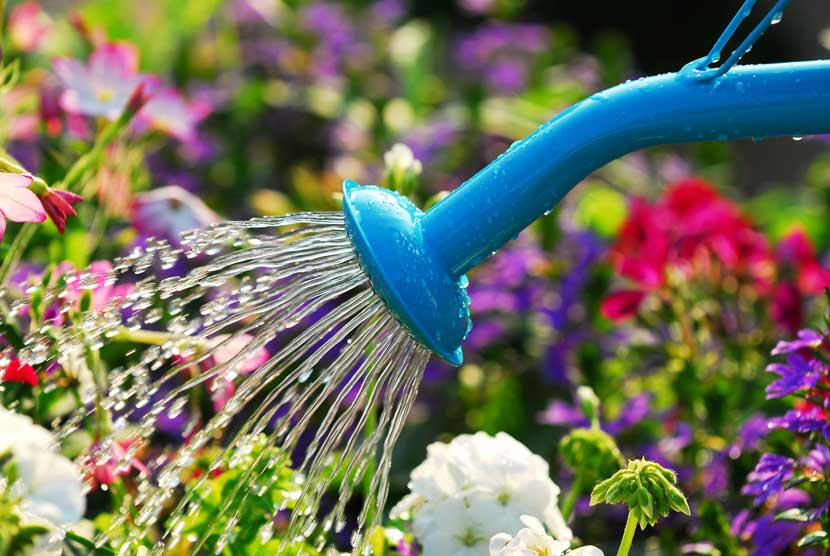 how to take care of plants in summer