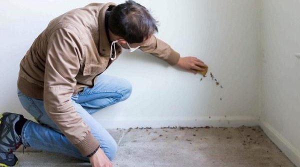 How to remove mold from walls