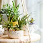 Where and how to place feng shui plants