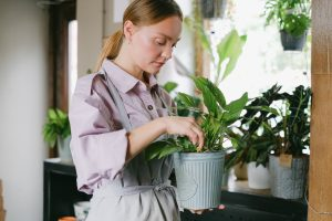 How To Prune Houseplant Properly 2021