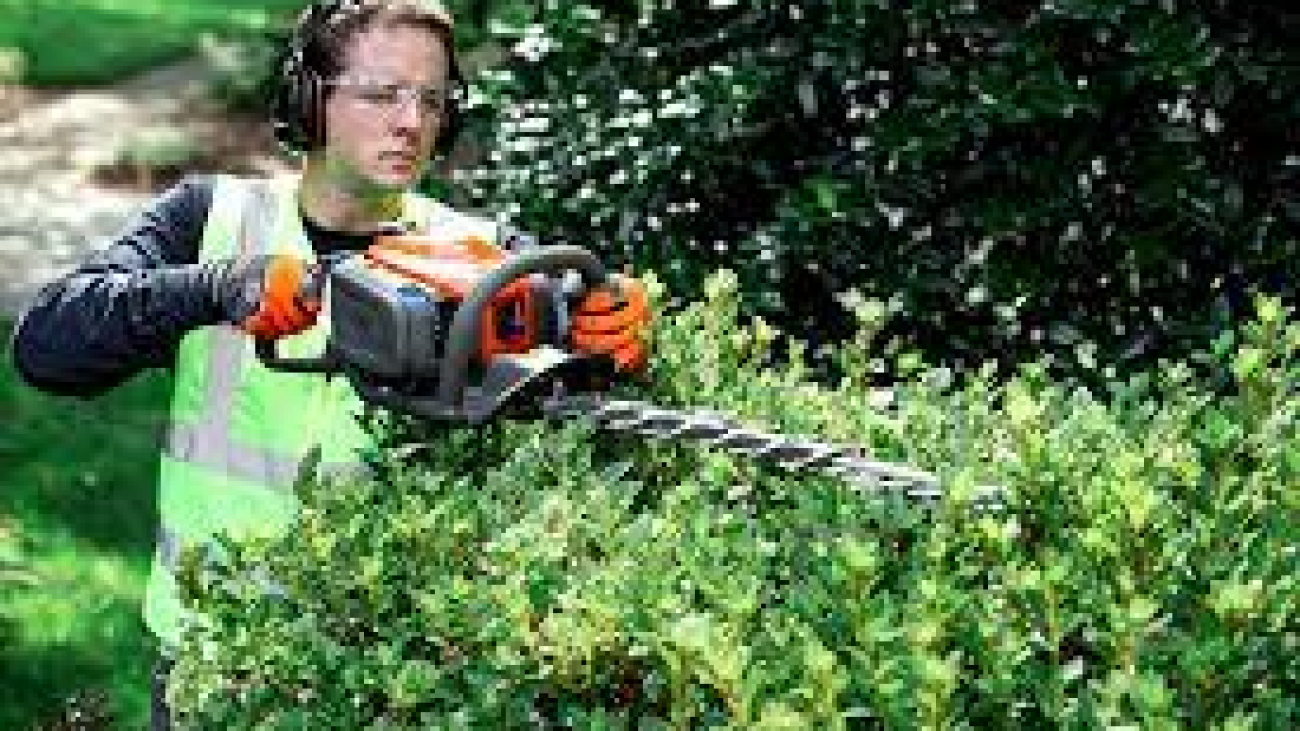 Why hire a professional for Hedge Trimming2