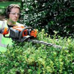Why hire a professional for Hedge Trimming?