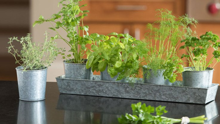What are the best herbs to grow at home? Culinary herbs